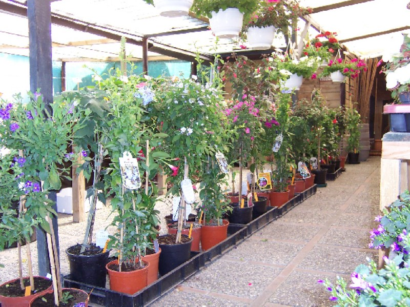 Tuincentrum Martien Graat